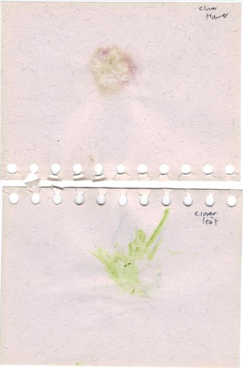 Clover_flower_and_leaf